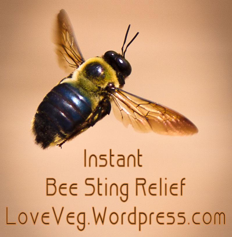 bee-relief